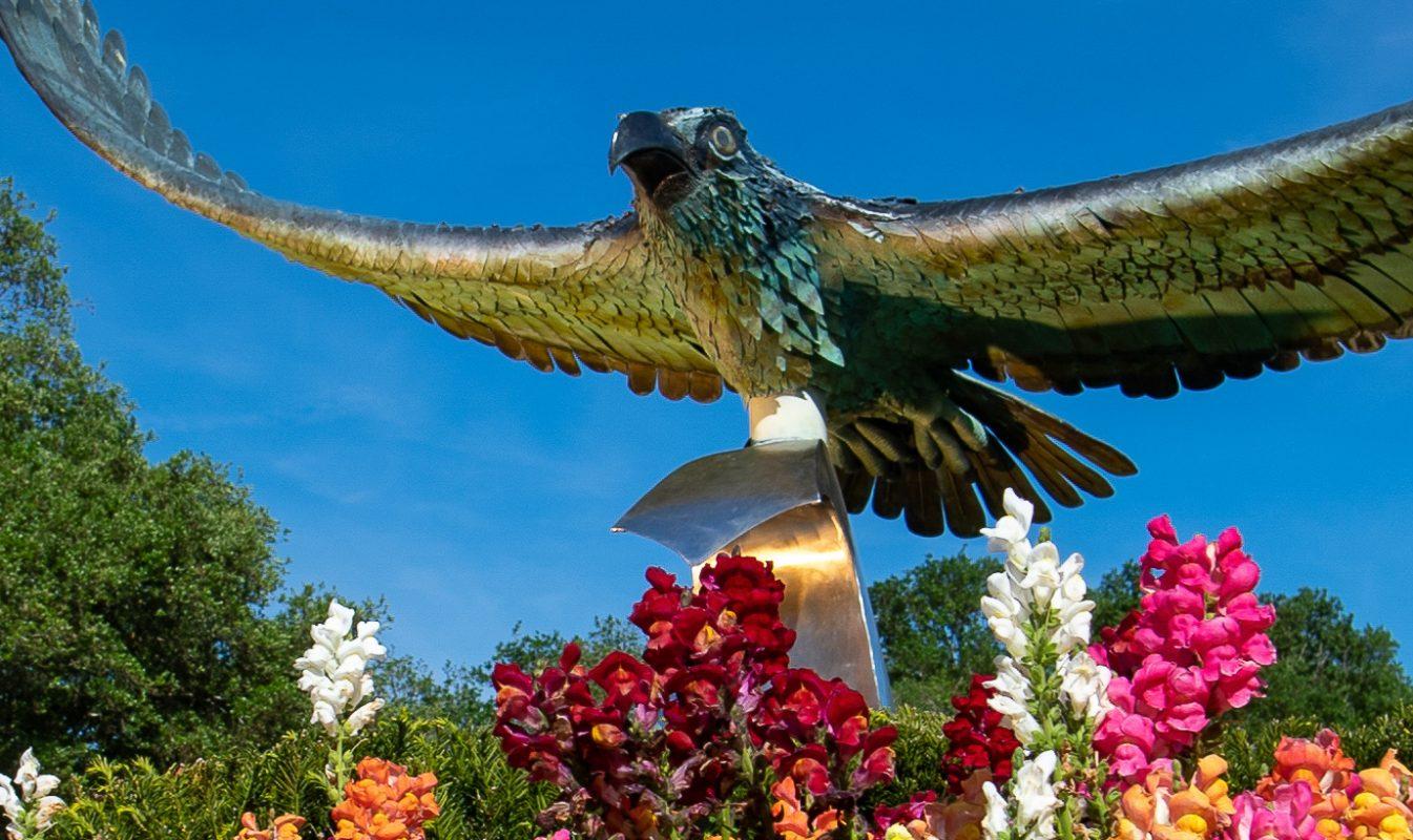 UNCW campus seahawk statue