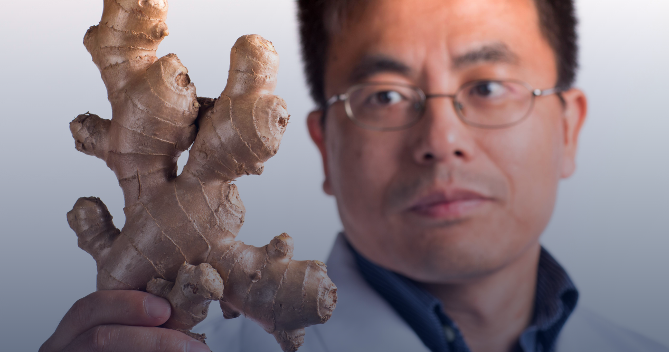 Researcher holds ginger root.